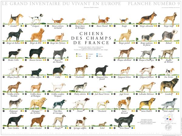 Dangerous dog breeds list