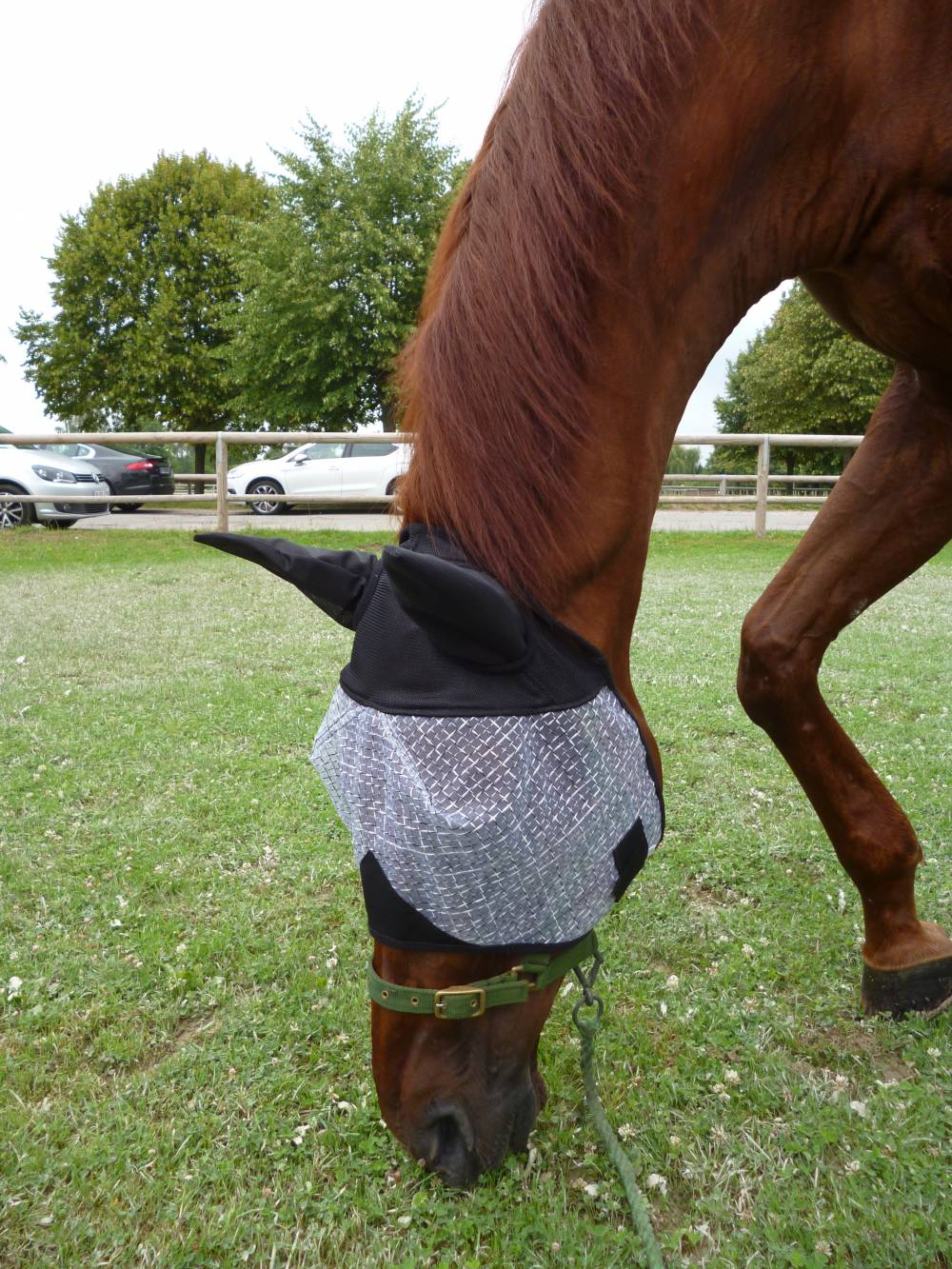 masque anti insectes a franges pour chevaux cheval ane anti insectes masques et bonnets anti. Black Bedroom Furniture Sets. Home Design Ideas